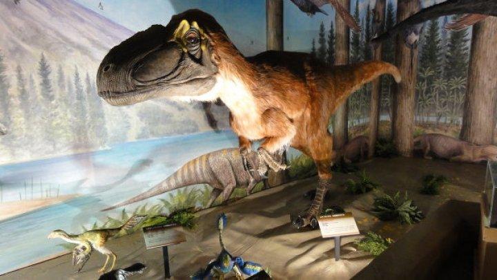Ученые выяснили, как тяжелые динозавры высиживали яйца