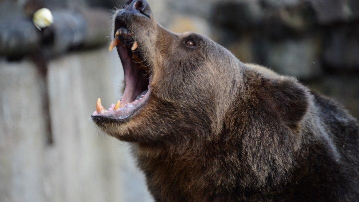 Американка отбила пятилетнюю дочь у медведя