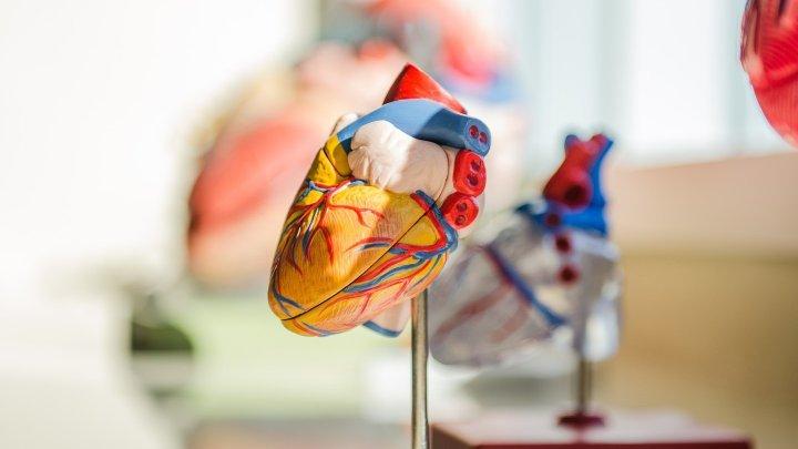 Учёные научились останавливать сердце с помощью света
