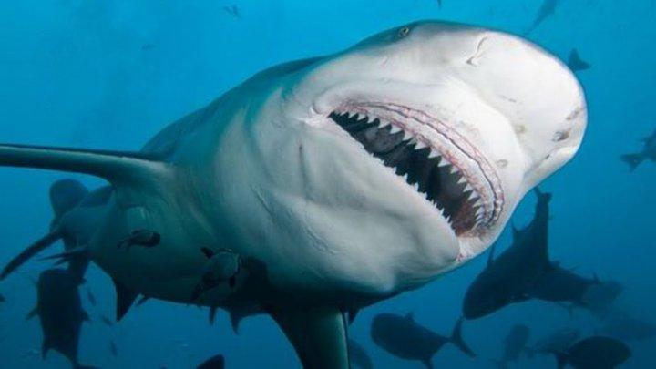 Во Флориде акула схватила подростка за ногу (фото)