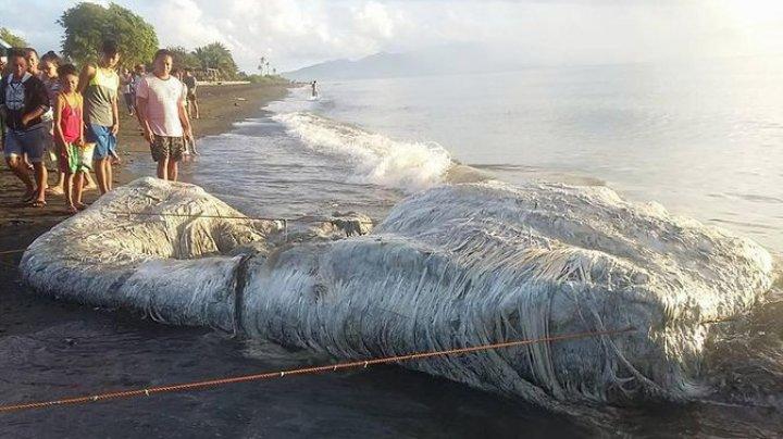 """Огромного """"волосатого монстра"""" выбросило на берег на Филиппинах"""