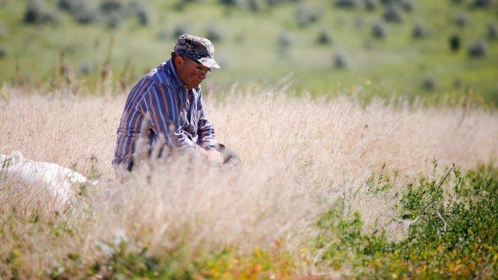 Фермеры назвали главную угрозу урожаю зерновых
