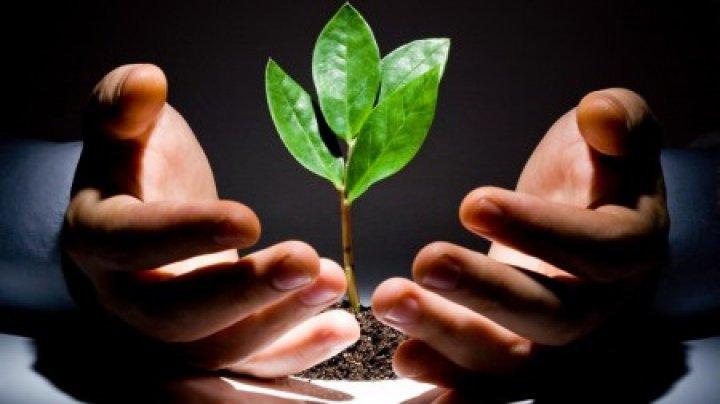 В легком человека выросло дерево