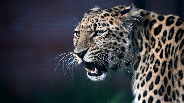 В горах Адыгеи построили комплекс для диких животных