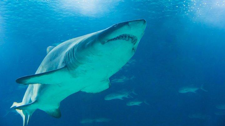 Схватку акулы-молота с тарпоном сняли на видео