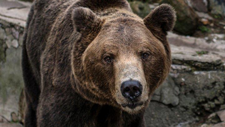 Рядом с аэропортом Мурманска встретили медведя (фото)