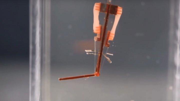 Японские учёные создали робота с живыми мышцами