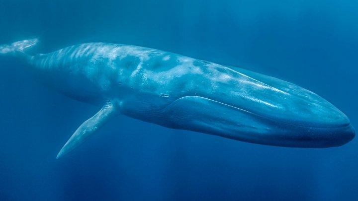 В Таиланде кит съел 80 пластиковых пакетов и умер