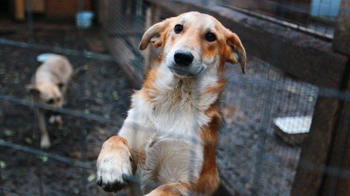 На смену птичьему и свиному гриппу может прийти собачий