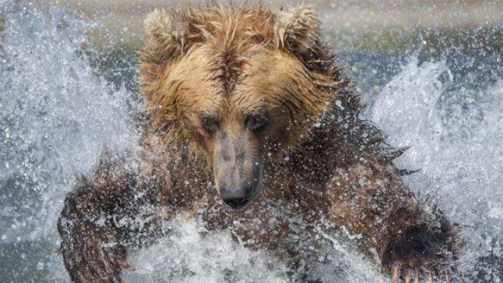 На Камчатке рыбак утонул, убегая от медведя