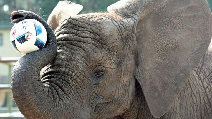 В Таиланде прошел футбольный матч с участием слонов