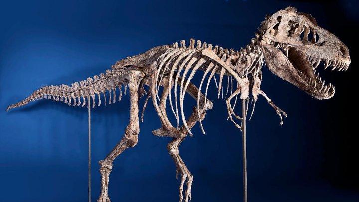 В Париже скелет динозавра продали за 2 миллиона евро