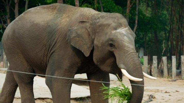 Слон Майкла Джексона сбежал из зоопарка Флориды