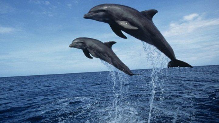 """У берегов Калифорнии коптер снял тысячу дельфинов """"на прогулке"""" с двумя китами"""