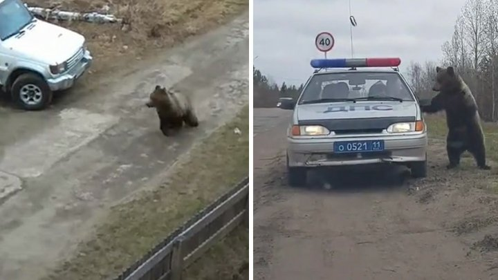 Полицейские прогнали медведя с детской площадки: видео