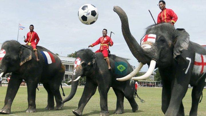 В Таиланде футболисты сыграли со слонами (видео)
