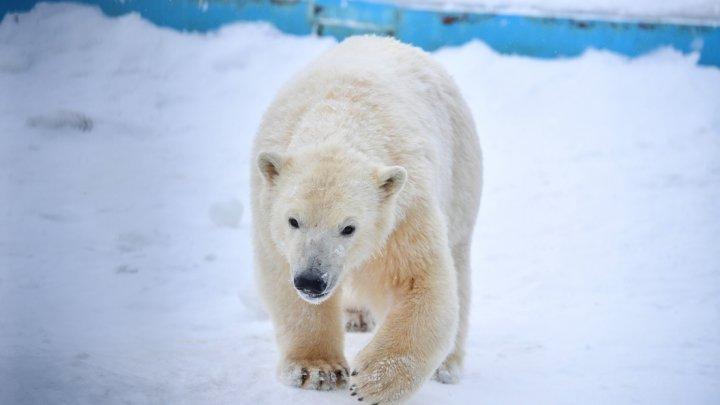 Медведь разгромил отель и застрял в окне: видео