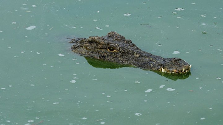 В Индонезии убили 292 крокодила после смерти мужчины