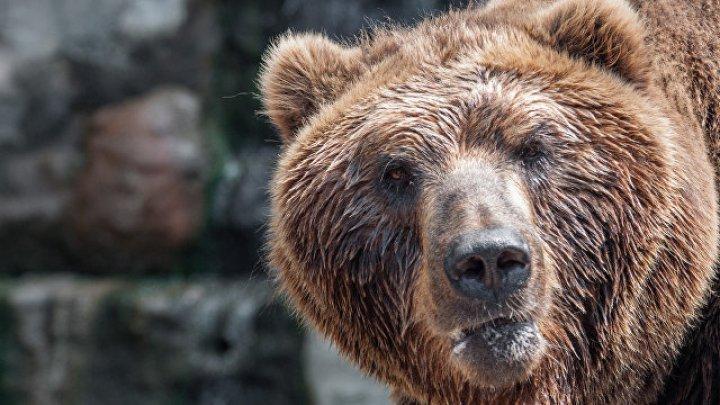 Нежданный гость: В США Медведь залез в бассейн, спасаясь от жары (видео)
