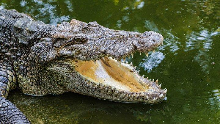 Пугавшего 10 дней туристов крокодила поймали в Таиланде