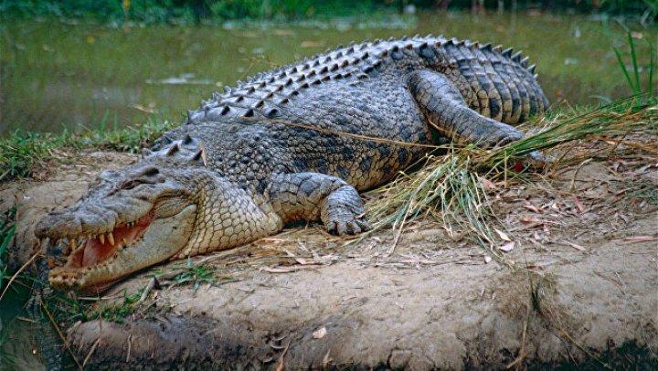 Мать прыгнула в реку и отбила сына у крокодила