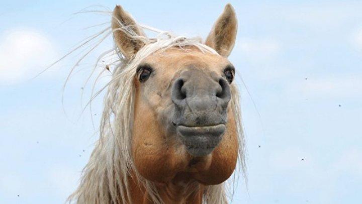 Камчатскому депутату отказали в парковке для коня