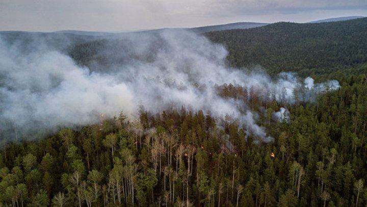 В Латвии несколько дней не могут потушить горящий лес
