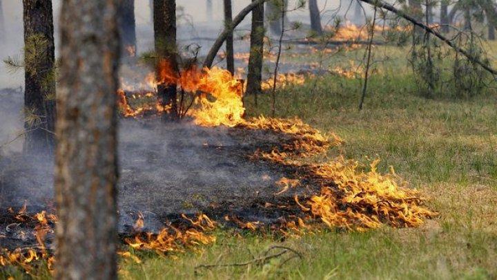 Лесные пожары в Якутии будут тушить при помощи искусственного дождя