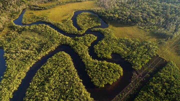 Ученые узнали, что выращивали фермеры Амазонии 4500 лет назад