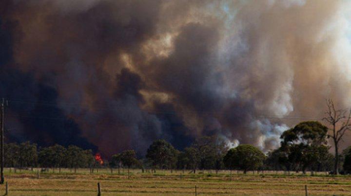Птица села на провода и устроила масштабный пожар в Германии