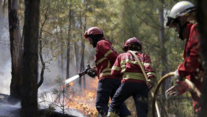 В Португалии начали расследование из-за лесных пожаров на юге страны