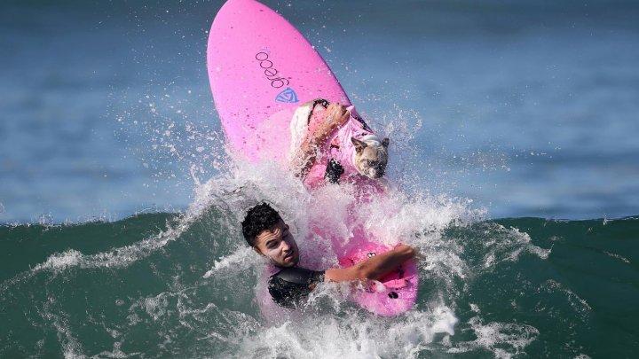 В Тихом океане состоялся чемпионат по собачьему серфингу