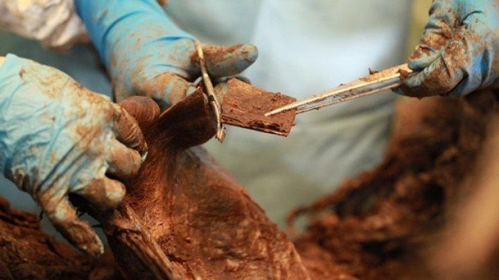 Ученые нашли скелет мамонта с мягкими тканями и шерстью