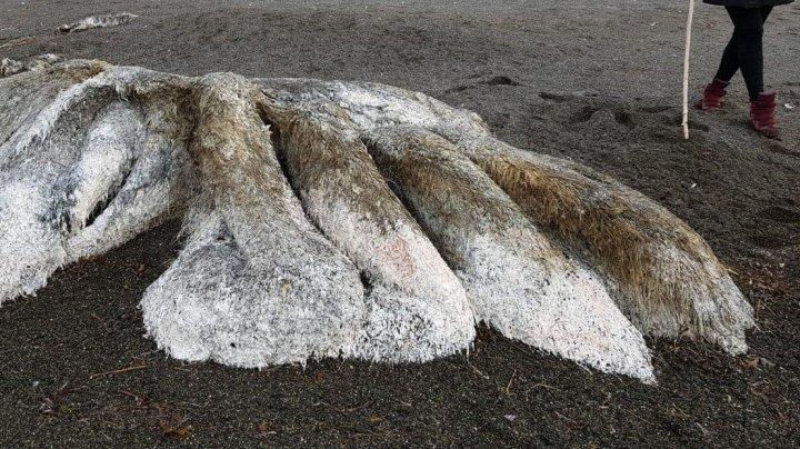 На побережье Камчатки обнаружили останки волосатого монстра