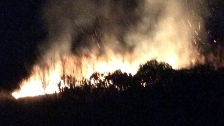 В Одесской области подожгли виноградники французского винодела