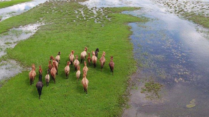Британка проскакала 1000 км на полудикой лошади по Монголии