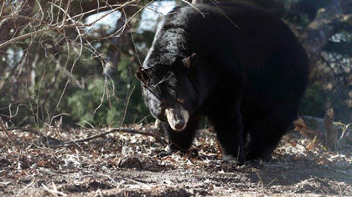 Охотник пустил в медведя стрелу и поплатился
