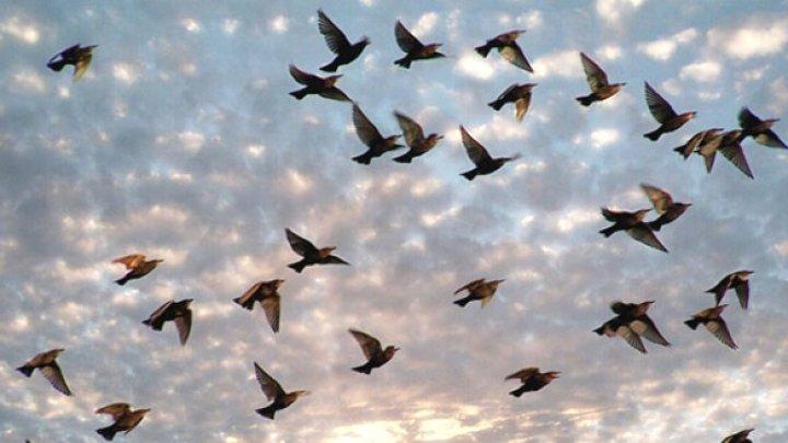 Ученые: птицы стареют быстрее из-за дорожного шума