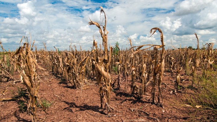 Убытки Германии от засухи превысили миллиард евро