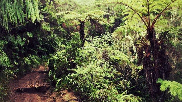 В джунглях Вьетнама обнаружили тело советского офицера, пропавшего полвека назад