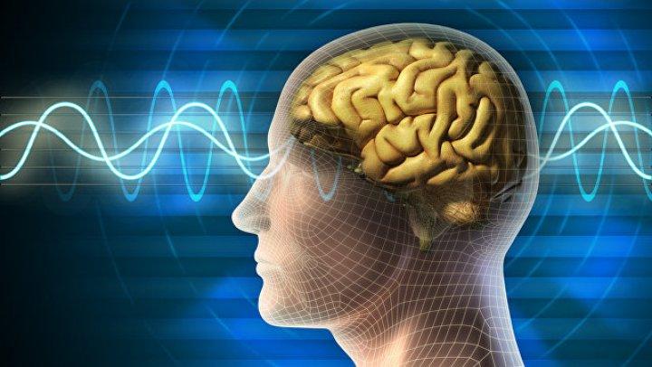 В мозге человека обнаружен отдел, отвечающий за стирание памяти