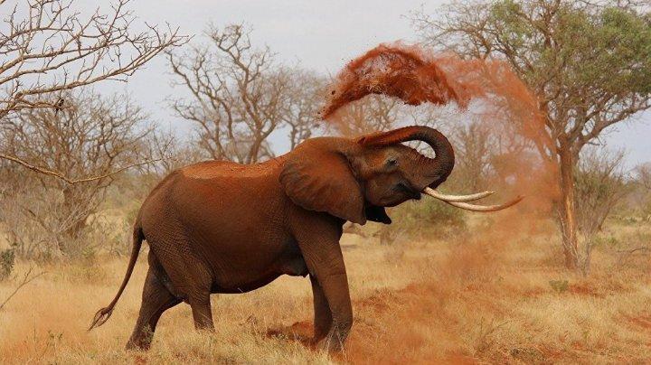 Немецкую туристку в Африке растоптал слон