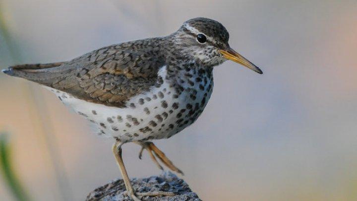 Необъяснимый феномен отнимает жизни тысяч птиц в Эквадоре