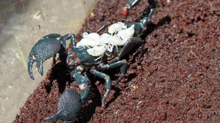 В Бразилии младенец выжил после семи укусов скорпиона