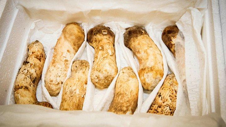 Ким Чен Ын подарил президенту Южной Кореи много грибов