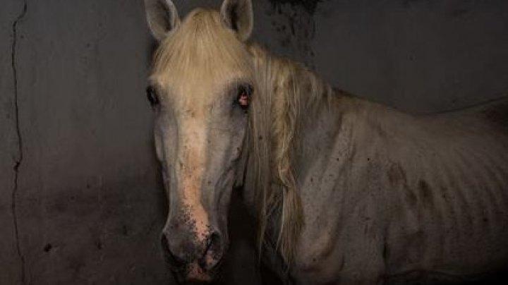 Зоозащитники рассказали о голодающих полицейских лошадях