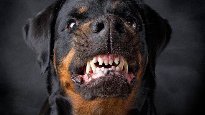 Любимый пес насмерть загрыз хозяйку в Подмосковье