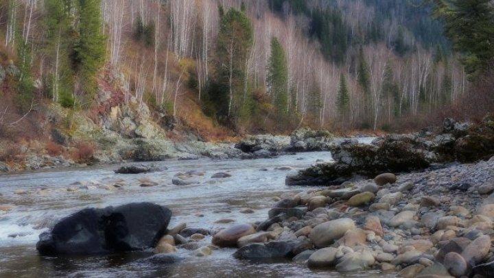 В Сибири два брата сбежали от кредиторов в тайгу