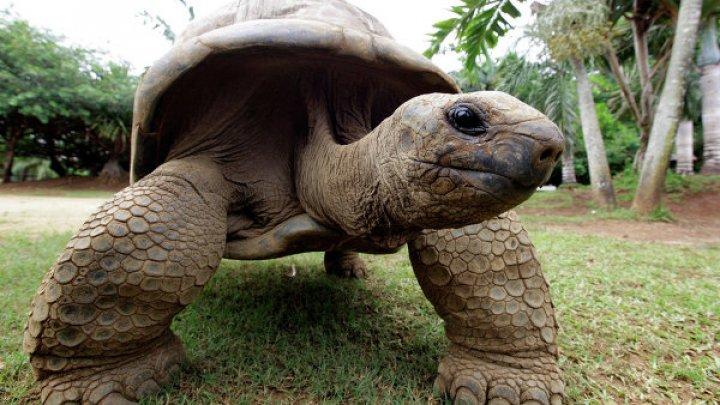 Более сотни слоновых черепах похитили на Галапагосских островах