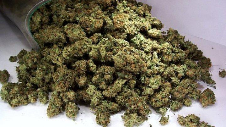 В парламенте Испании обсудят легализацию марихуаны